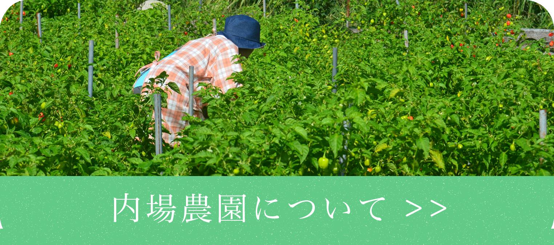 内場農園について